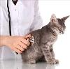 Ветеринарные клиники в Ардоне